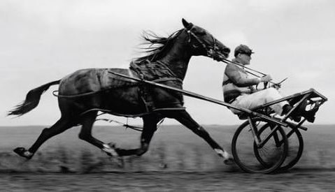 horseB4cart.jpg